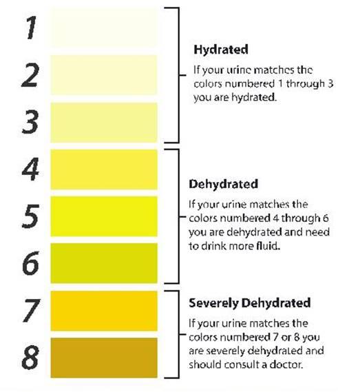 Достаточно ли Вы пьёте воды. По цвету мочи. Тест