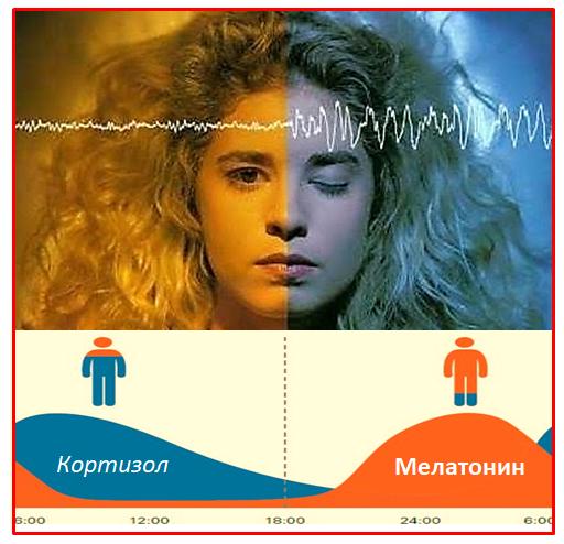 Мелатонин. Суточный график. Кортизол