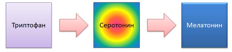 Триптофан. Серотонин. Мелатонин