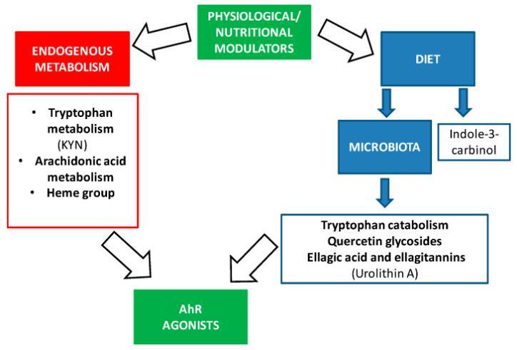 Арилуглеводородный рецептор